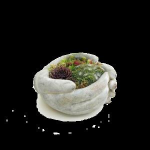 Grafperkplantjes - Albertina